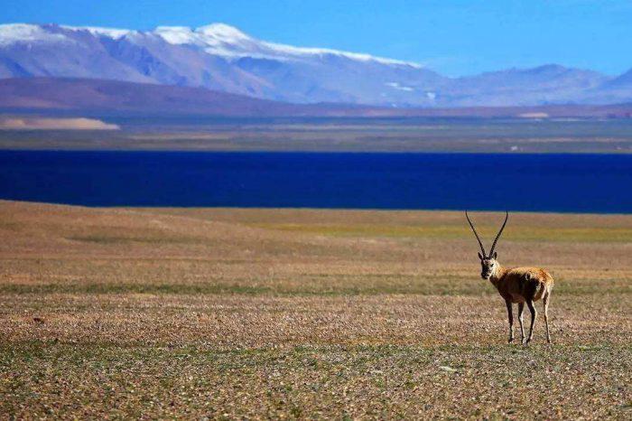 西藏阿里14日游